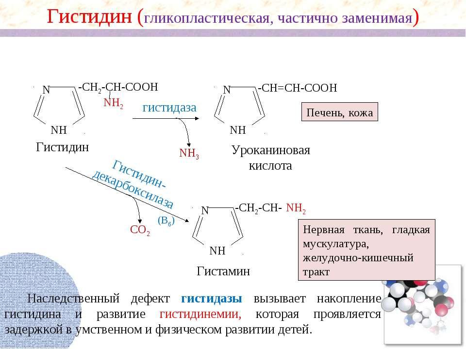 NH2 N NH -CH2-CH-COOH NH2 NH3 N NH -CH=CH-COOH гистидаза Гистидин Уроканинова...