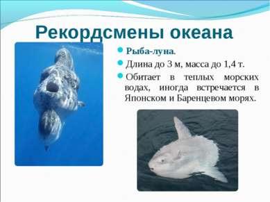 Рекордсмены океана Рыба-луна. Длина до 3 м, масса до 1,4 т. Обитает в теплых ...