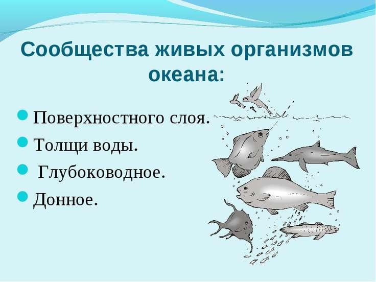 Сообщества живых организмов океана: Поверхностного слоя. Толщи воды. Глубоков...