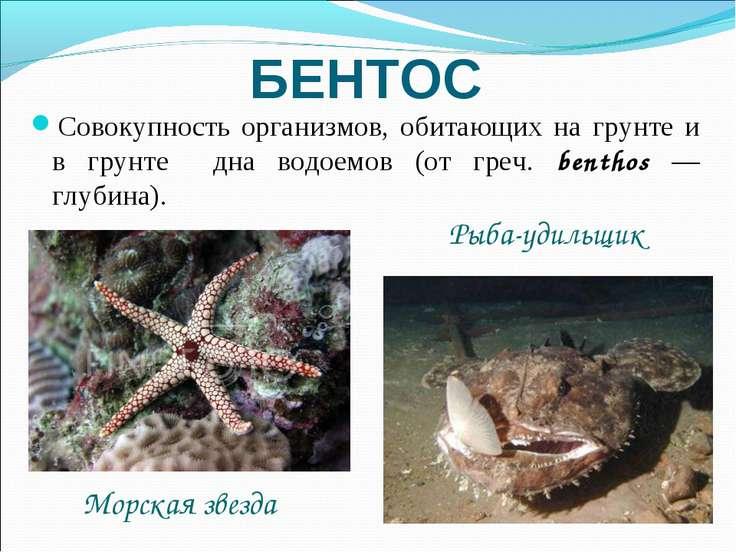 БЕНТОС Совокупность организмов, обитающих на грунте и в грунте дна водоемов (...