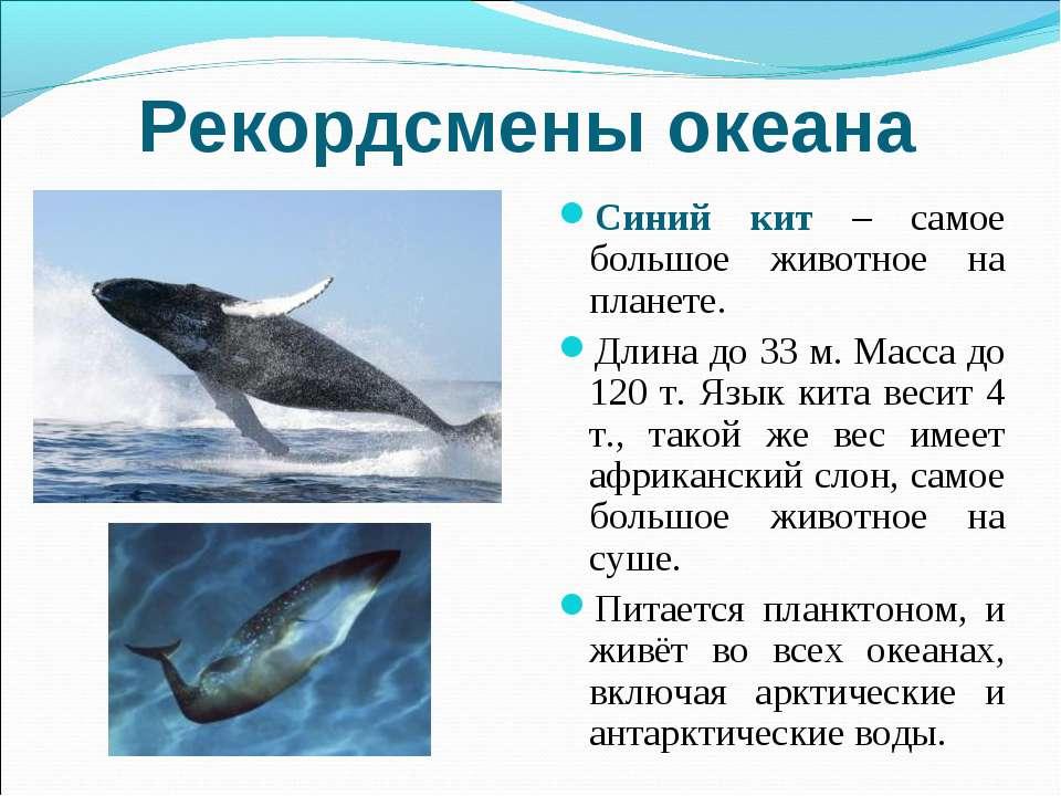 Рекордсмены океана Синий кит – самое большое животное на планете. Длина до 33...