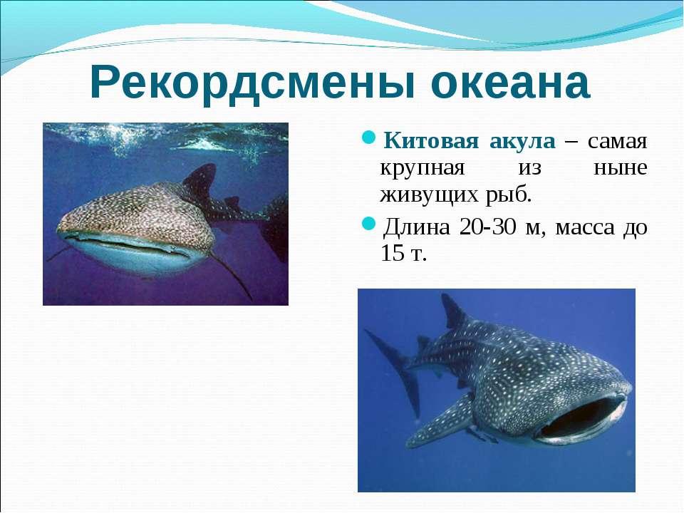 Рекордсмены океана Китовая акула – самая крупная из ныне живущих рыб. Длина 2...