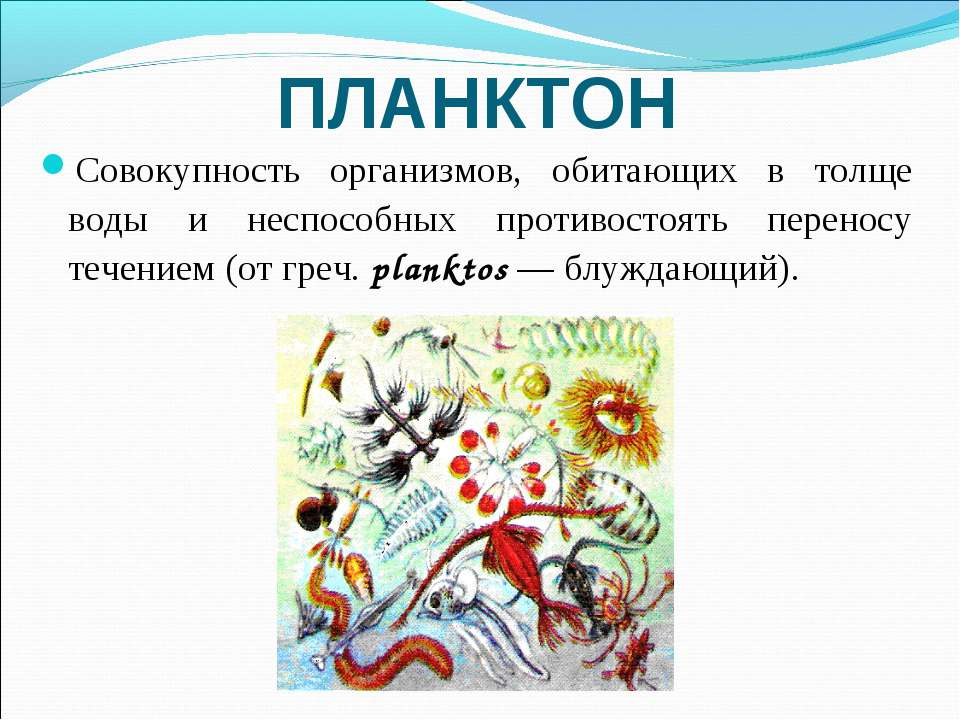 ПЛАНКТОН Совокупность организмов, обитающих в толще воды и неспособных против...