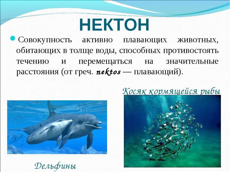 НЕКТОН Совокупность активно плавающих животных, обитающих в толще воды, спосо...