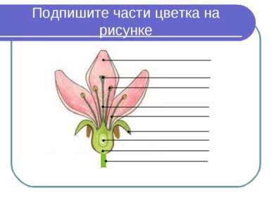 Подпишите части цветка на рисунке