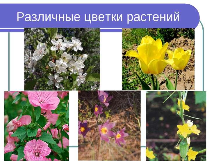 Различные цветки растений