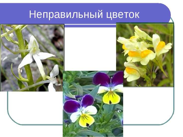 Неправильный цветок