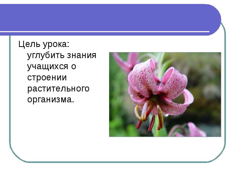 Цель урока: углубить знания учащихся о строении растительного организма.