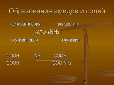 Образование амидов и солей аспарагиновая аспарагин +АТФ +NН3 глутаминовая глу...