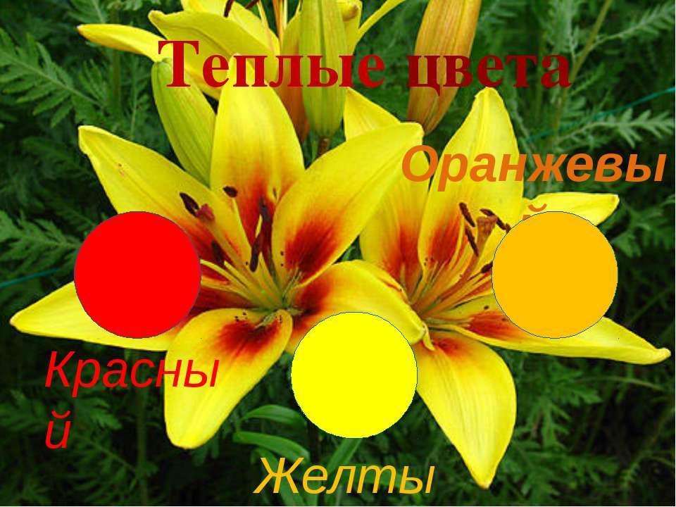 Оранжевый Красный Теплые цвета Желтый