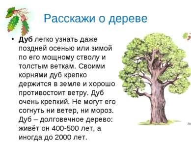 Расскажи о дереве Дублегко узнать даже поздней осенью или зимой по его мощно...