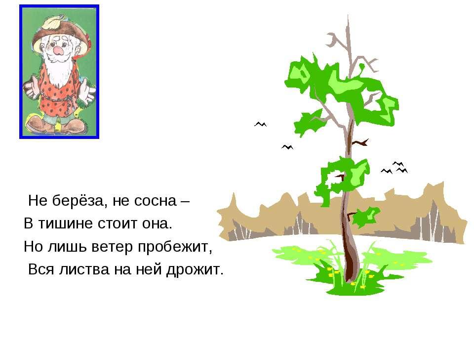 Не берёза, не сосна – В тишине стоит она. Но лишь ветер пробежит, Вся листва ...