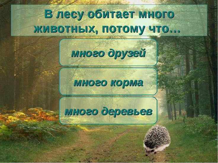 В лесу обитает много животных, потому что… много корма много друзей много дер...
