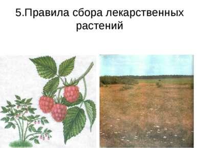 5.Правила сбора лекарственных растений
