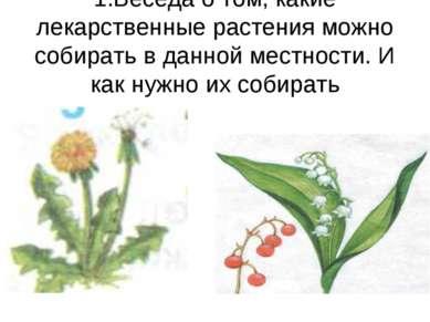 1.Беседа о том, какие лекарственные растения можно собирать в данной местност...