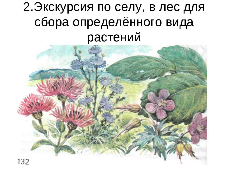 2.Экскурсия по селу, в лес для сбора определённого вида растений