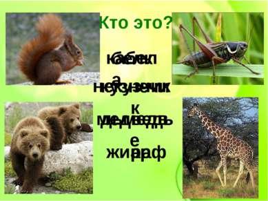 жираф медведь кузнечик белка Кто это? кабел жиарф некузчик дьмедве