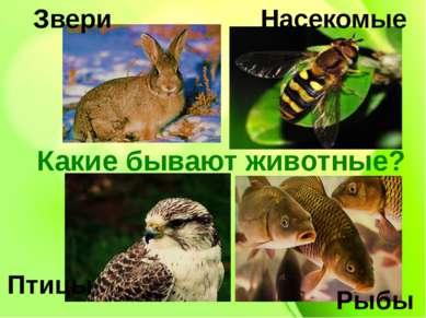 Какие бывают животные? Звери Рыбы Птицы Насекомые