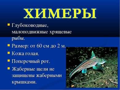Глубоководные, малоподвижные хрящевые рыбы. Размер: от 60 см до 2 м. Кожа гол...
