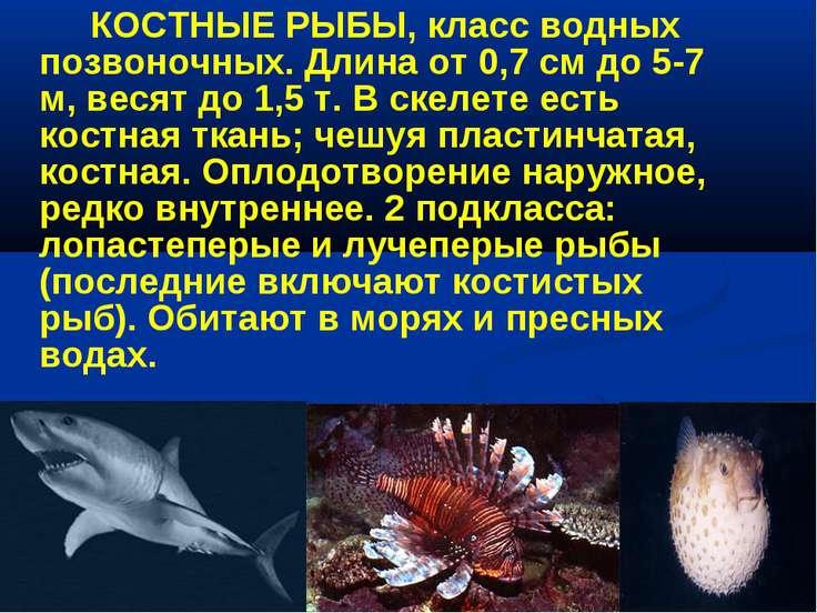 КОСТНЫЕ РЫБЫ, класс водных позвоночных. Длина от 0,7 см до 5-7 м, весят до 1,...