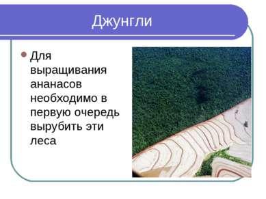 Джунгли Для выращивания ананасов необходимо в первую очередь вырубить эти леса