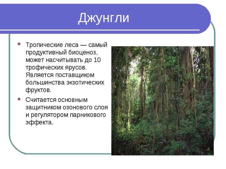 Джунгли Тропические леса — самый продуктивный биоценоз, может насчитывать до ...