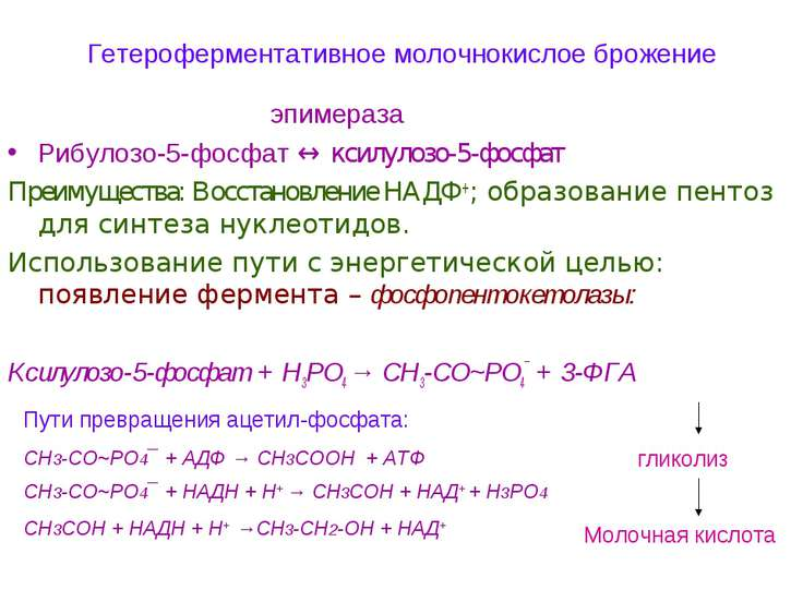 Гетероферментативное молочнокислое брожение эпимераза Рибулозо-5-фосфат ↔ кси...