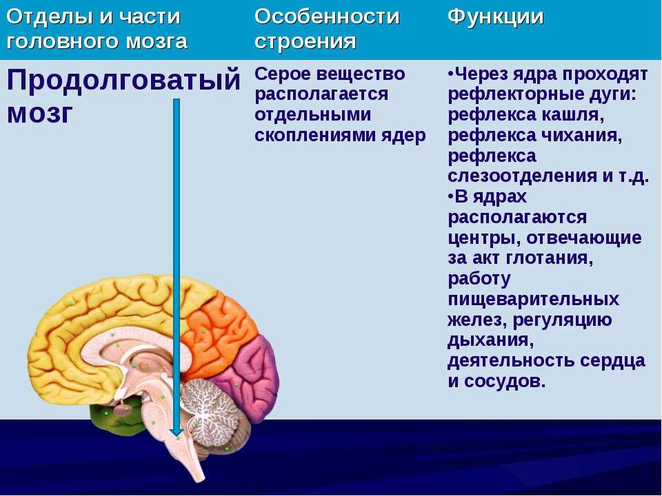 Отделы и части головного мозга Особенности строения Функции Продолговатый моз...