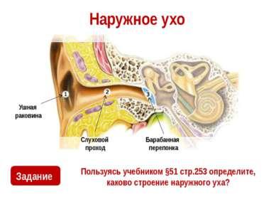 Наружное ухо Пользуясь учебником §51 стр.253 определите, каково строение нару...
