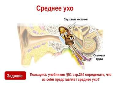 Среднее ухо Пользуясь учебником §51 стр.254 определите, что из себя представл...