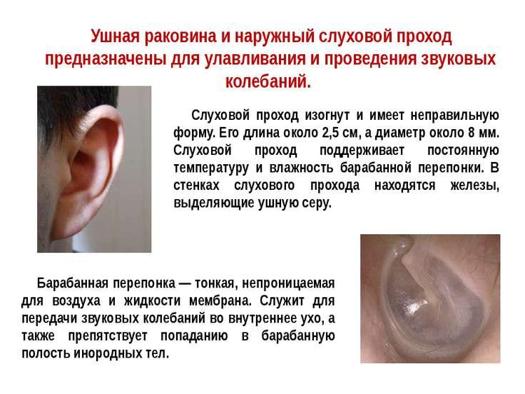 Ушная раковина и наружный слуховой проход предназначены для улавливания и про...