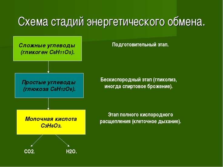 Схема стадий энергетического обмена. Сложные углеводы (гликоген C6H11O5). Про...