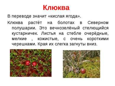 Клюква В переводе значит «кислая ягода». Клюква растёт на болотах в Северном ...