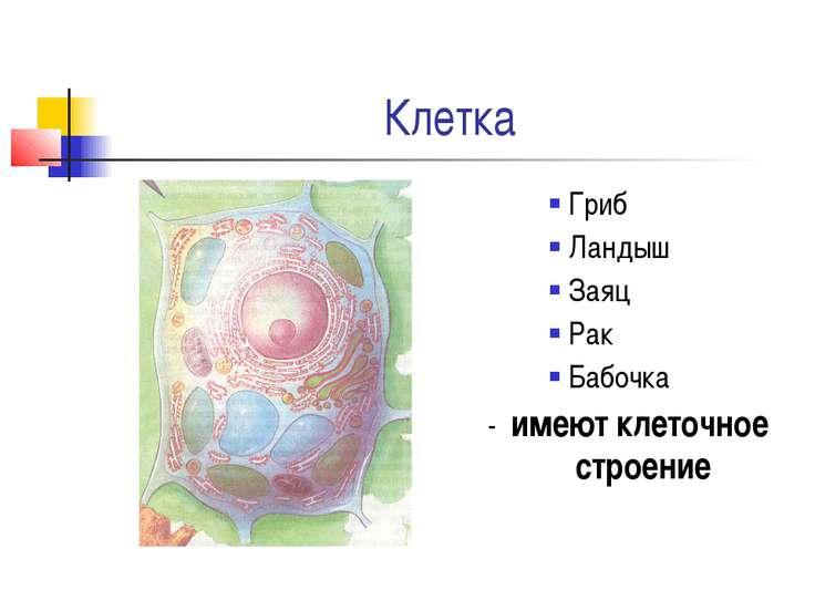 Клетка Гриб Ландыш Заяц Рак Бабочка - имеют клеточное строение