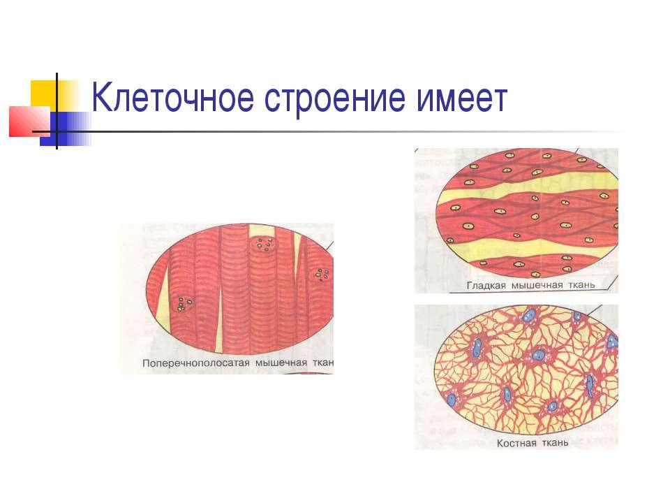 Клеточное строение имеет