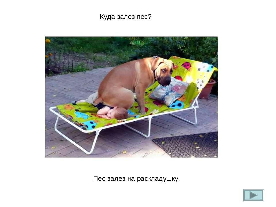 Куда залез пес? Пес залез на раскладушку.