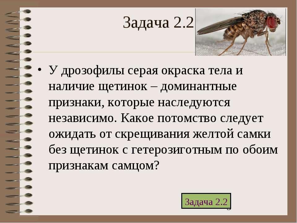 Задача 2.2 У дрозофилы серая окраска тела и наличие щетинок – доминантные при...