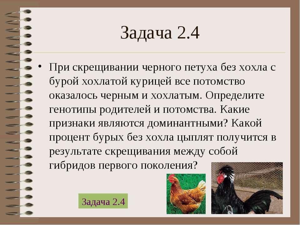 Задача 2.4 При скрещивании черного петуха без хохла с бурой хохлатой курицей ...