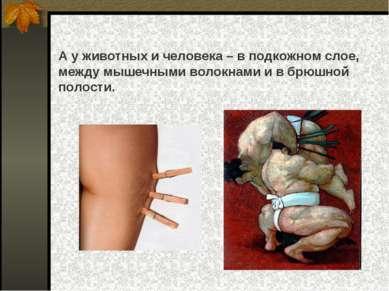 А у животных и человека – в подкожном слое, между мышечными волокнами и в брю...