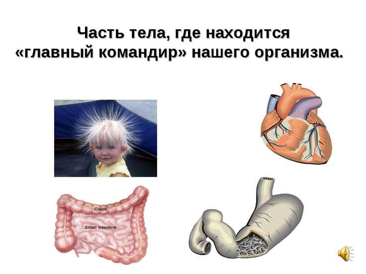 Г О Л О В А Часть тела, где находится «главный командир» нашего организма.