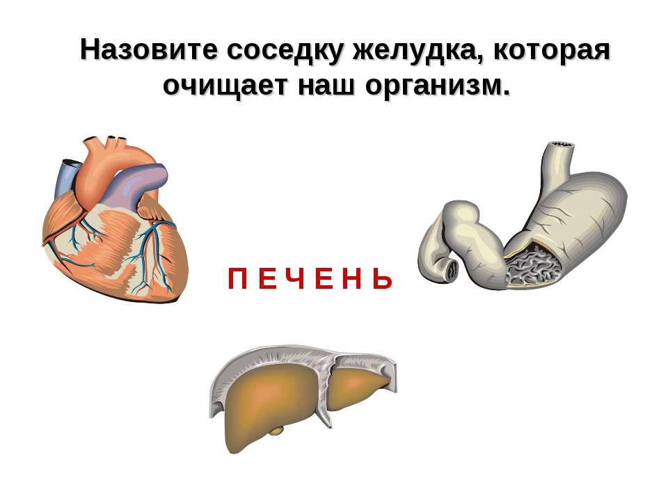 П Е Ч Е Н Ь Назовите соседку желудка, которая очищает наш организм.