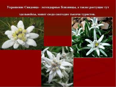 Украшение Свидовца - легендарные Близницы, а также растущие тут эдельвейсы, м...