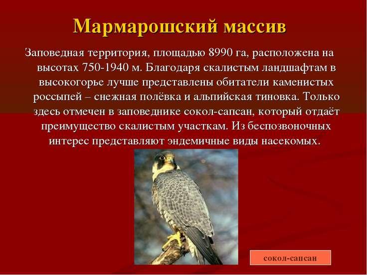 Мармарошский массив Заповедная территория, площадью 8990 га, расположена на в...