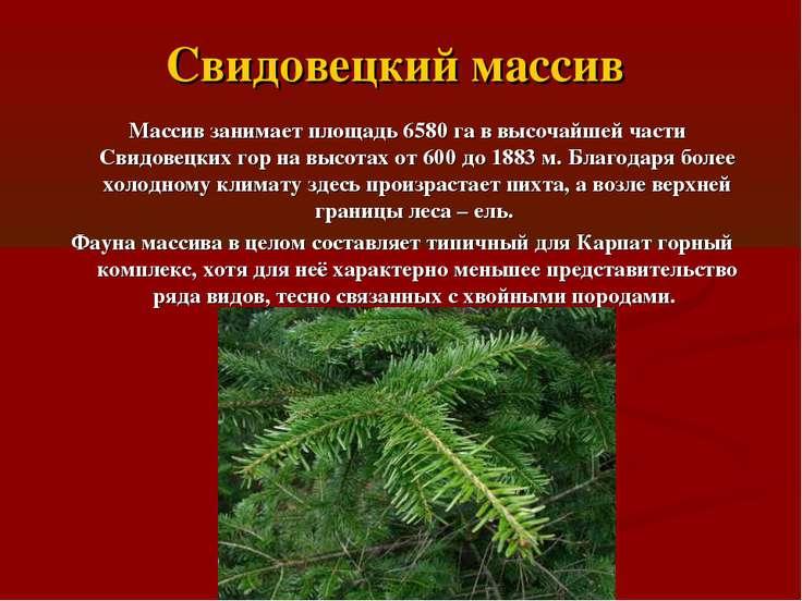 Свидовецкий массив Массив занимает площадь 6580 га в высочайшей части Свидове...