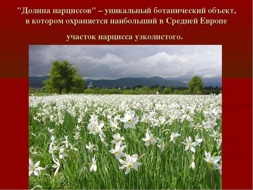 """""""Долина нарциссов"""" – уникальный ботанический объект, в котором охраняется наи..."""