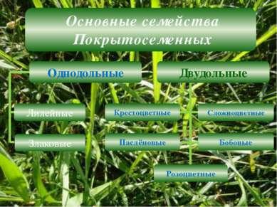 Основные семейства Покрытосеменных Лилейные Двудольные Однодольные Злаковые К...