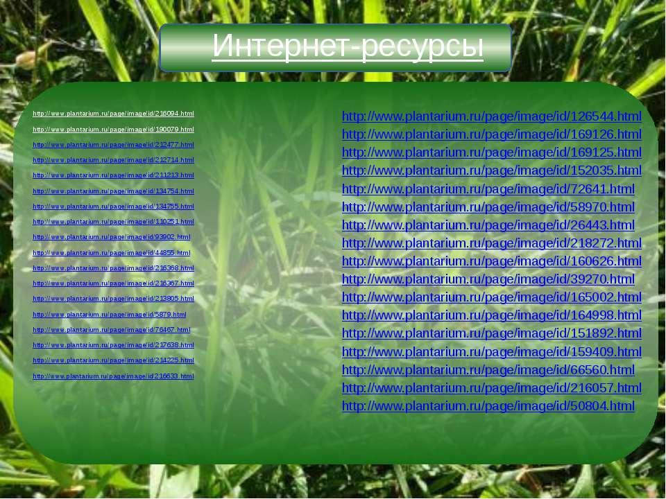 Интернет-ресурсы http://www.plantarium.ru/page/image/id/216094.html http://ww...