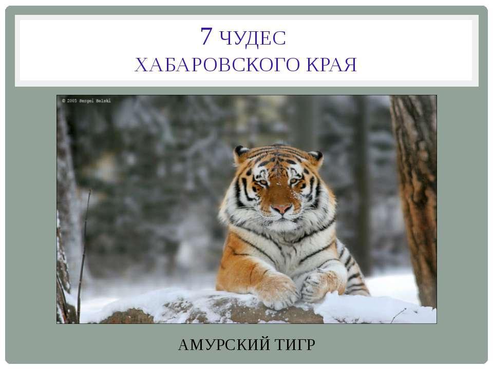 7 ЧУДЕС ХАБАРОВСКОГО КРАЯ АМУРСКИЙ ТИГР