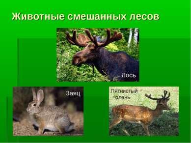 Животные смешанных лесов Заяц Лось Пятнистый олень