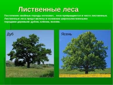 Лиственные леса Постепенно хвойные породы исчезают, леса превращаются в чисто...